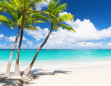 Coconut Palm Trees By the Crystal Clear Ocean