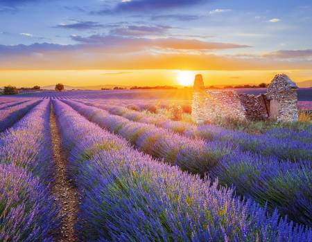 Sunset in Field in Provence France