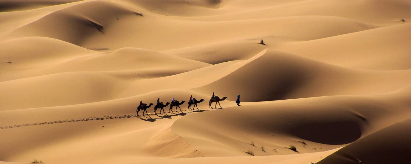 Camels with Riders Through the Desert