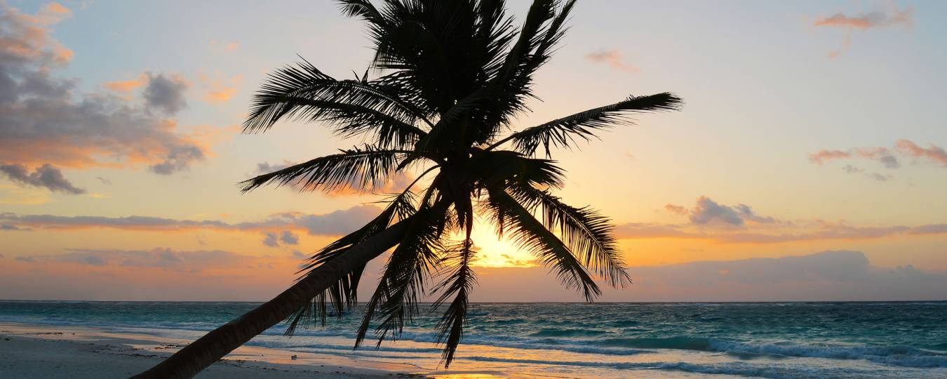 Palm Tree at Sunset in Tulum