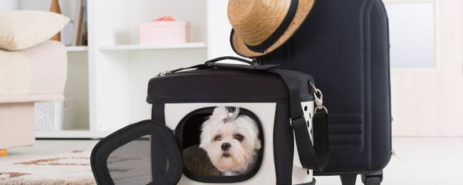 Pet going on vacation to Telluride