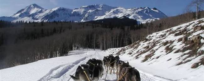 Winter moon dog sledding winter activity in Telluride