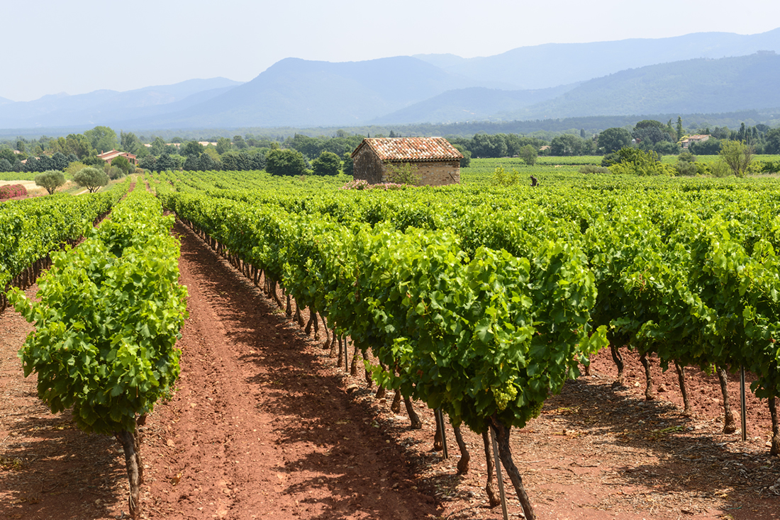 Vineyard with mountain view in Provence