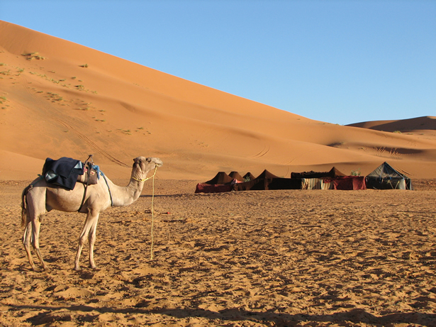 Camel with Berber Tents, Morocco