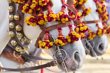 White Horses Adorned with Yellow and Red Flowers