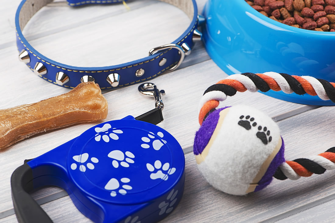 Pet accessories to bring on vacation for animal